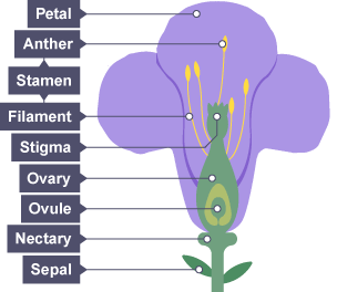 BBC Bitesize - KS3 Biology - Plant reproduction - Revision 1