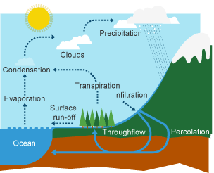 BBC Bitesize - KS3 Geography - The water cycle and river ...