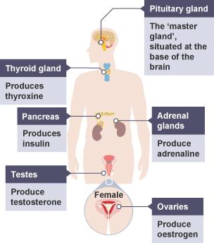 BBC Bitesize - GCSE Biology - Plant and animal hormones ...