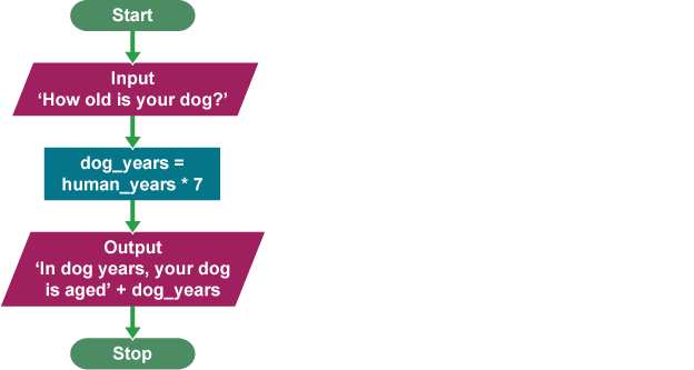 How do you calculate your age in dog years?
