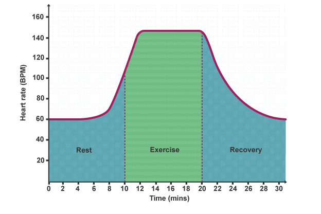 why does heart rate increase during exercise biology