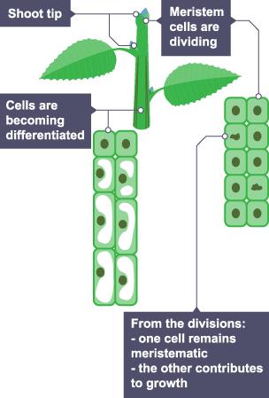 BBC Bitesize - GCSE Biology (Wales - 2016 onwards) - Cell ...