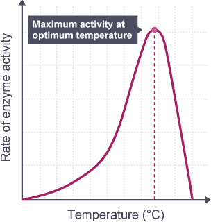 the effect of tempature on enzyme Dubay examines the relationship between temperature and enzyme activity full ted ed lesson:.