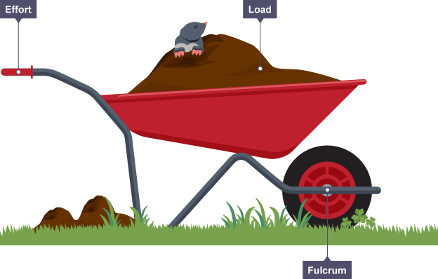 A wheelbarrow showing the fulcrum at the wheel and the effort focused at the handle, with the load in between within the wheelbarrow itself.