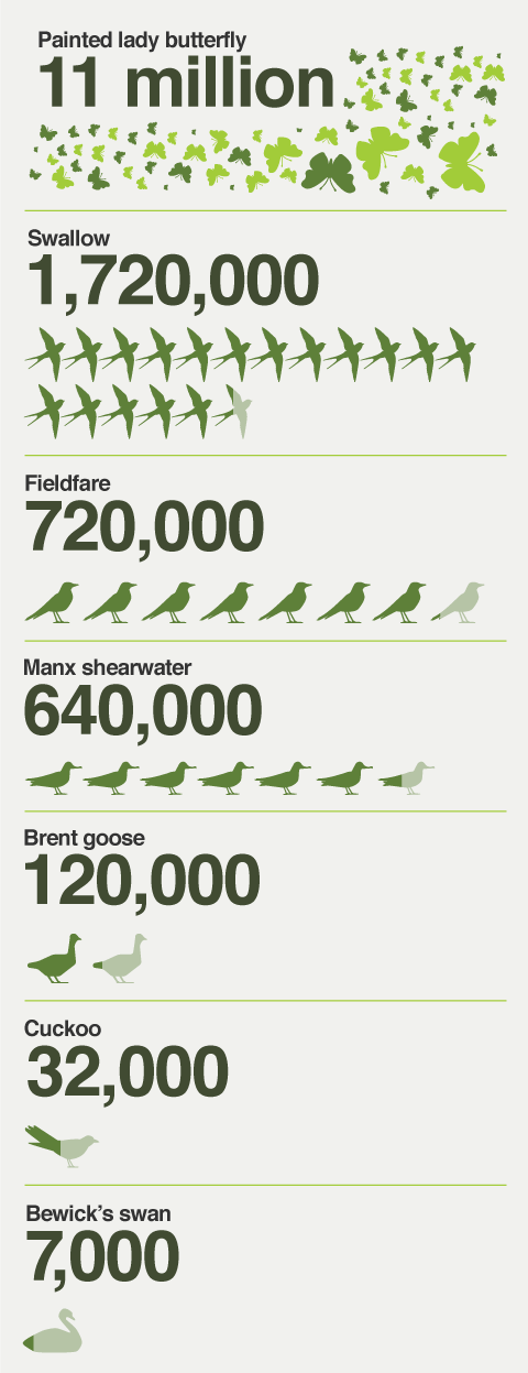 The numbers of some bird and butterfly species that migrate to the UK each year.