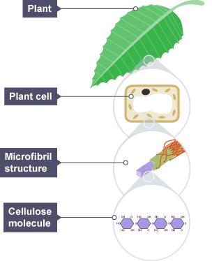 BBC Bitesize - Higher Biology - Science of food production ...