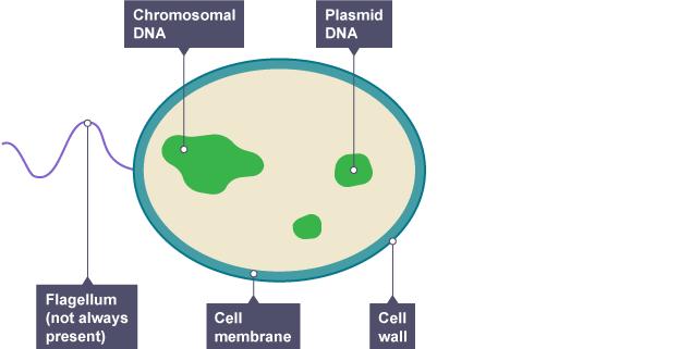 protozoa organisms bbc bitesize ks3 biology cells to systems revision 5