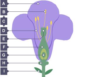 BBC Bitesize - KS3 Biology - Plant reproduction - Test