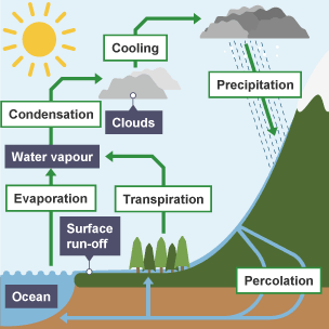 Bbc bitesize gcse biology water nitrogen and carbon cycles the water cycle ccuart Images