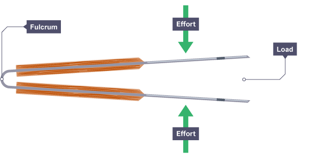 Tweezers showing the fulcrum at the closed end of the tweezers and load at the open end with the effort focused around a third of the distance from the load.