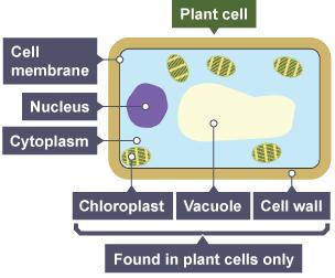 BBC Bitesize - GCSE Biology (Single Science) - Variety of ...