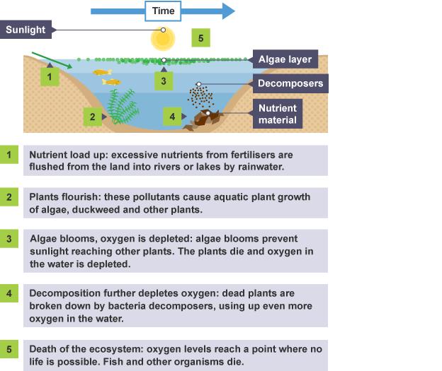 diagram illustration that represents eutrophication