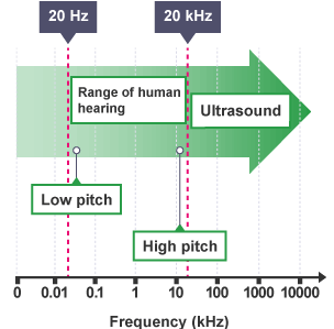 Cats And Dogs Can Hear Ultrasound