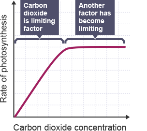 to investigate the effect of carbon dioxide concentration on the rate of photosynthesis essay However, eventually the rate levels off to become constant due to limitation of the carbon dioxide concentration (too low) or the temperature (to low) and any increase in light intensity has no further effect on the rate of photosynthesis for plant growth.