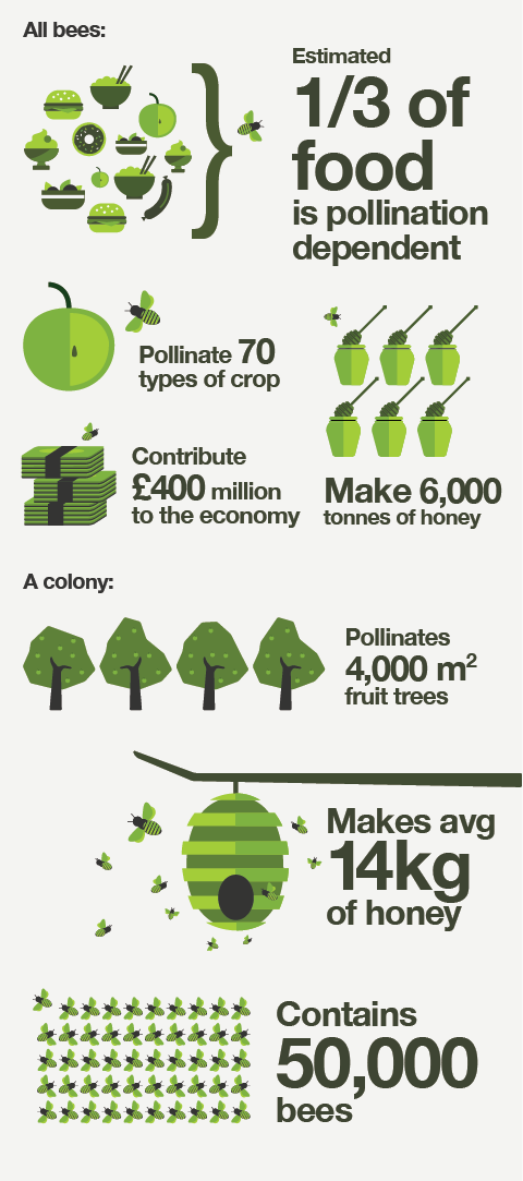 An illustration of what all honey bees, and a colony of honey bees, do for us in the UK each year.
