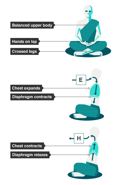 A figure with a balanced upper body, showing the chest expanding and the diaphragm contracting. A final figure shows as the chest contracts the diaphragm relaxes.