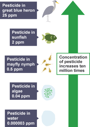 Pesticide Use Impact Of Natural Resources