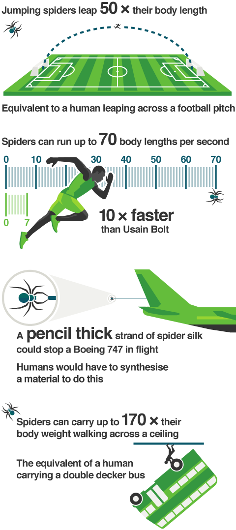 Infographic comparing four spider powers to those of humans